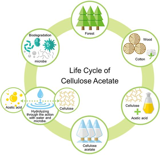 Biodegradability Of Cellulose Acetate Uff5cdaicel Corporation
